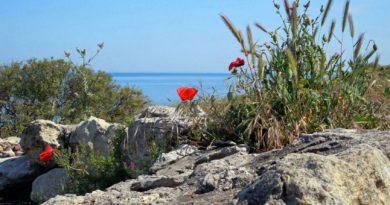 Воины из Башкирии отчаянно сражались в Крыму в годы Великой Отечественной войны